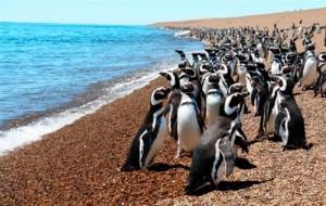 Esplorando l'argentina 11 Riserva di Punta Tombo
