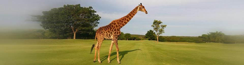 sudafrica giraffa 2