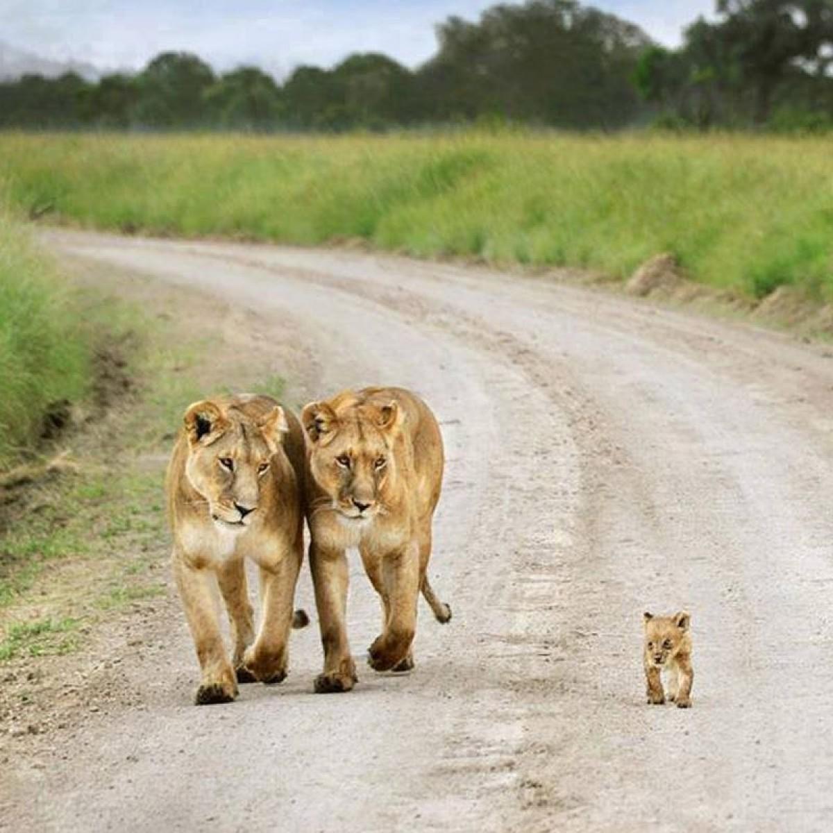 sudafrica leoni