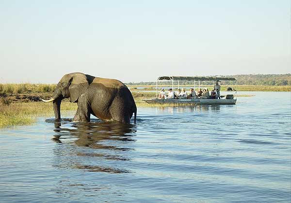tour sudafrica elefante