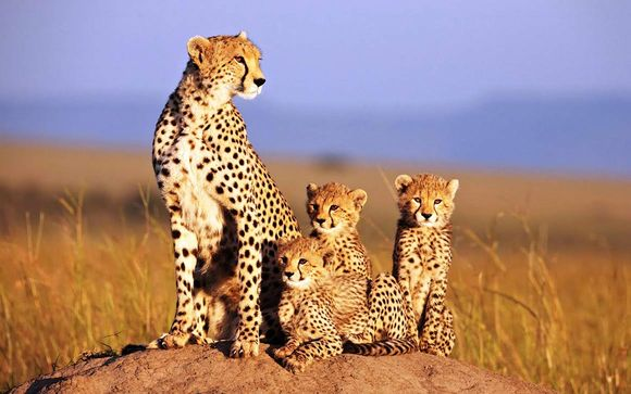 tour sudafrica ghepardi