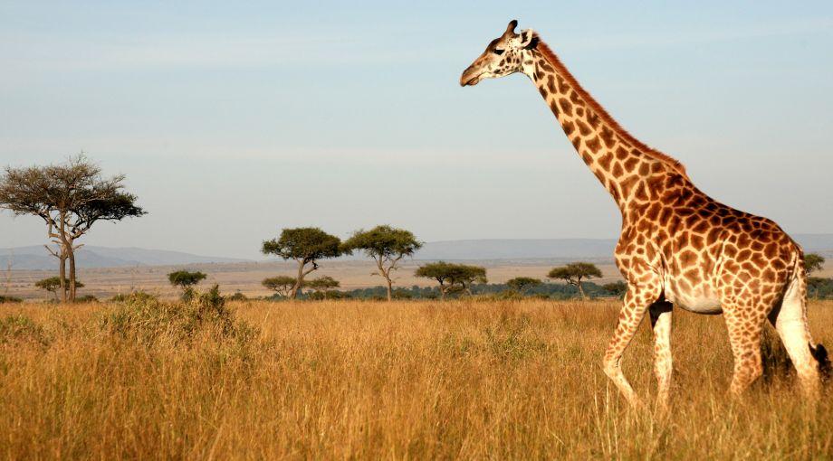 tour sudafrica giraffa