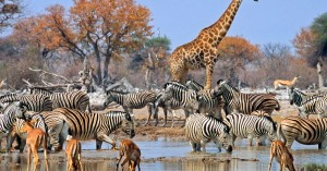 namibia-etosha-national-park-wildlife-istk-1200x630-c-center